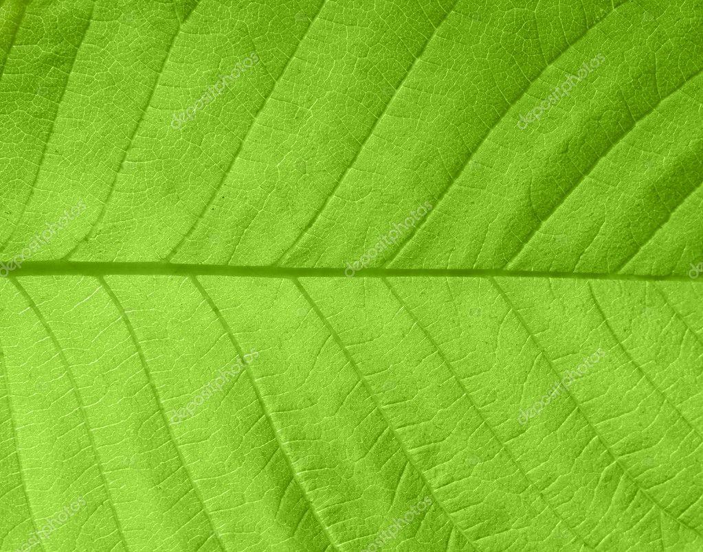 texture feuille