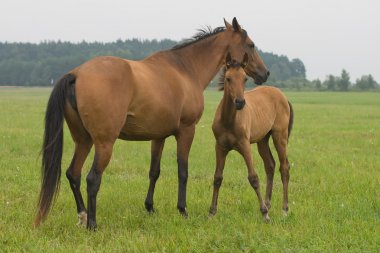 Horse with her foal