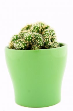 Small cactus plant in green pot