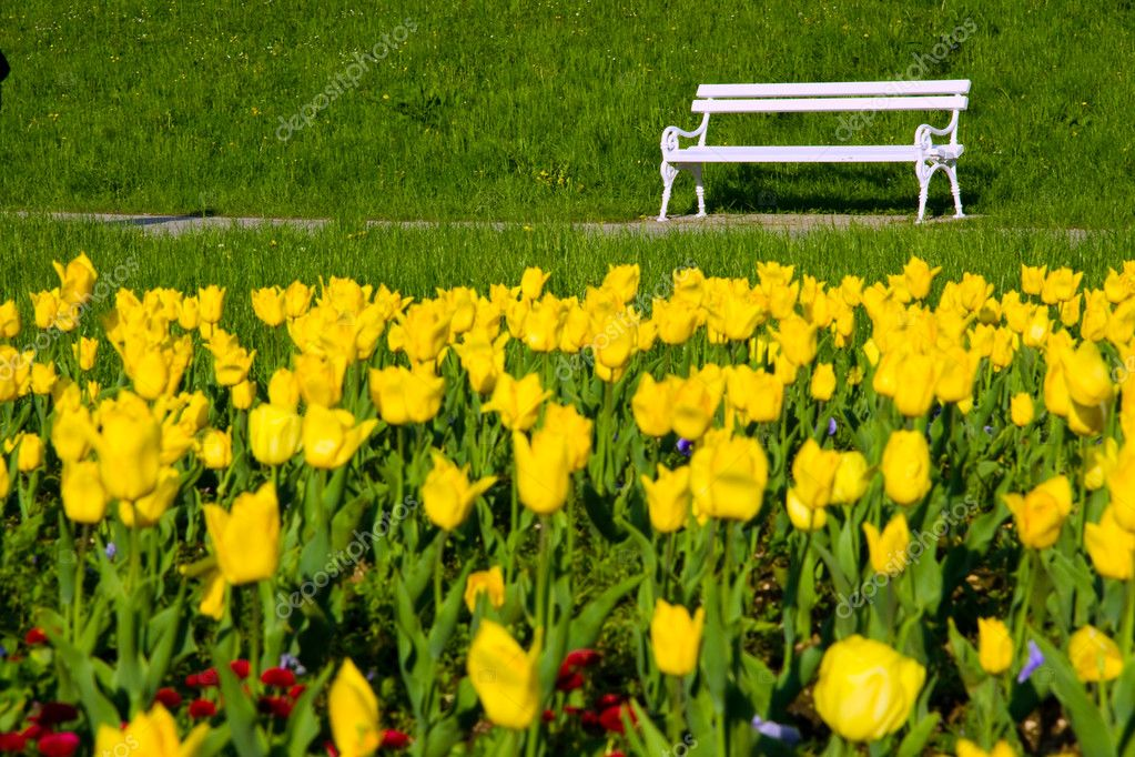 Park bench and yellow tulips
