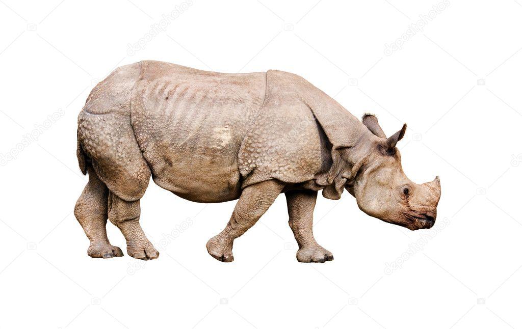 Rhinoceros isolated on white