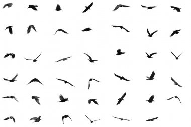 Birds for background