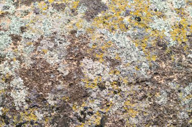 Moss on stone texture