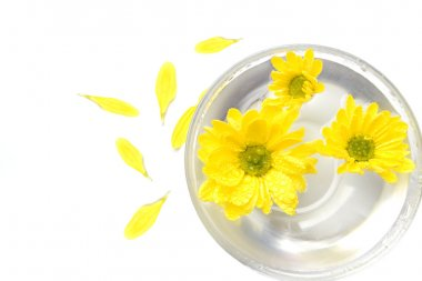 Yellow flowers in water and petals