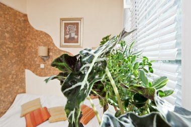 Sunny bedroom part with green plant leaf