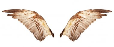 Two wings isolated on a white