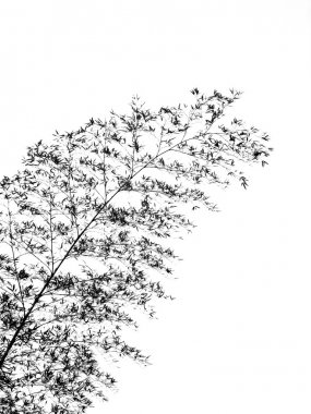 Bamboo Tree Swaying in the Breeze