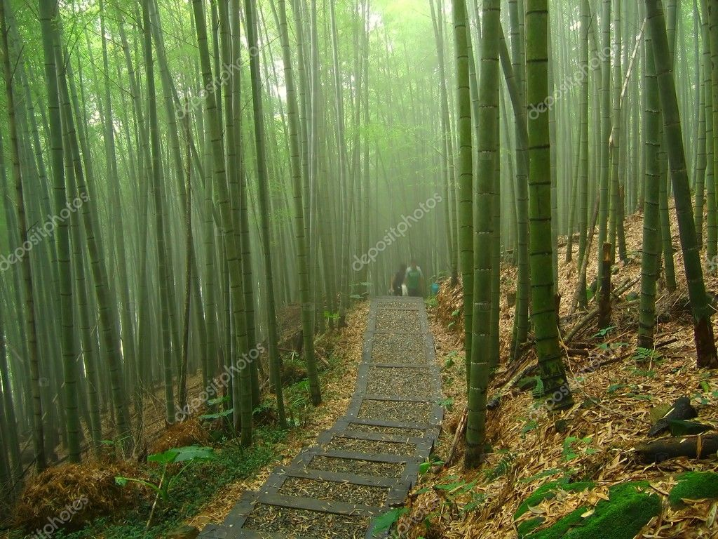 Romantic Bamboo Forest