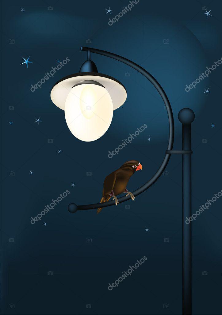 Fantastic parrot at night