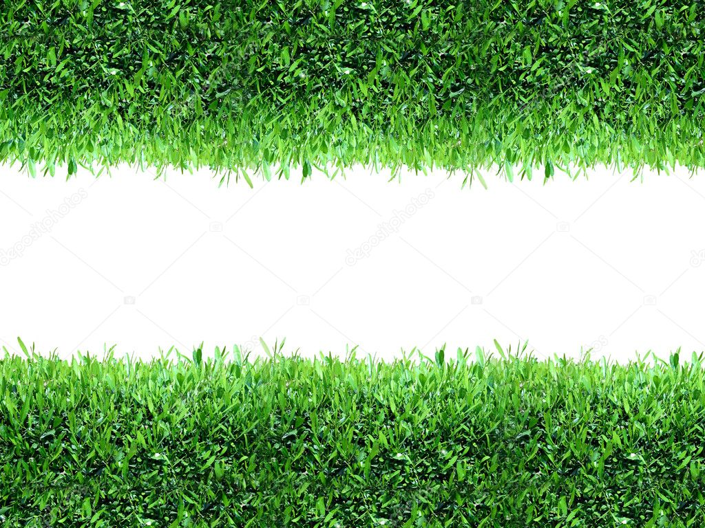 Spring, green grass background