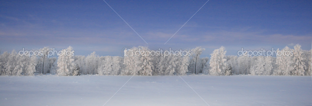 Winter forest beautiful