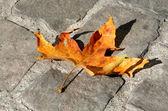 Photo Autumn maple leaf on the stone pavement