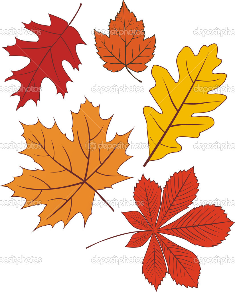 Collection of vector autumn leave shapes