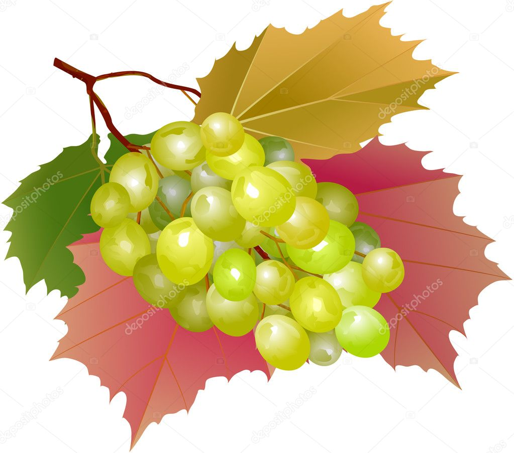 Cluster of grapes with leaves