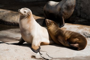 Couple of seals enjoing the sun