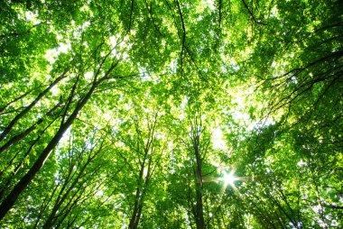 """Картина, постер, плакат, фотообои """"зеленый лес постеры картины модульные"""", артикул 1068007"""