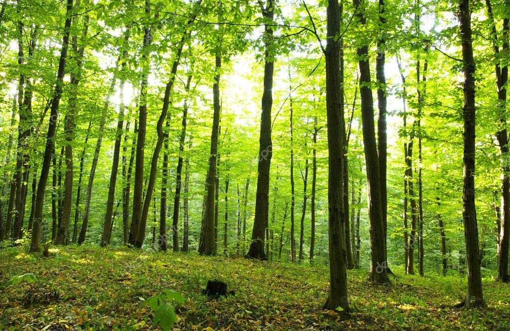 Фотообои Forest