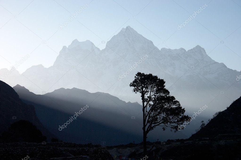 Lone tree at sunrise, Himalayas, Nepal