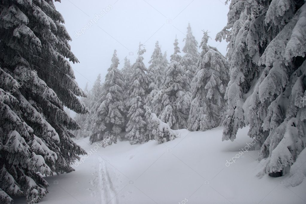 Ski track in a winter forest