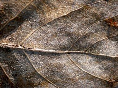 Dead leaf. Grunge.