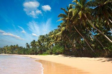 Idyllic beach. Sri Lanka