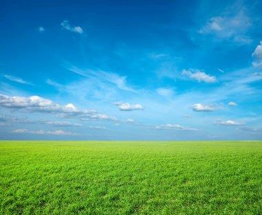 Field of green fresh grass under blue sky stock vector