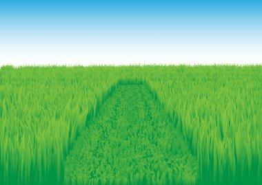 Oblique_grass_field