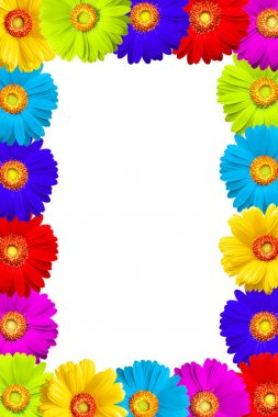 Flowers frame of colorful gerber