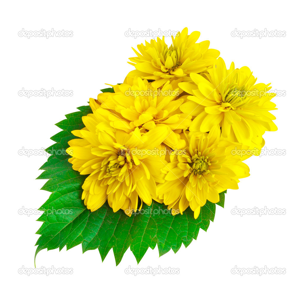 Yellow color flowers with green leafs
