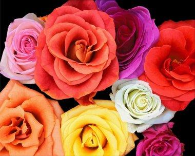 Bunch of roses. Vector illustration clip art vector