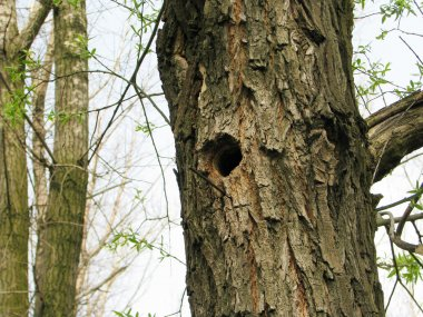Bird house, bark of tree with a hollow,