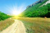 Fotografie cesta slunce