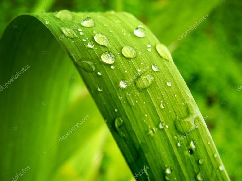 Gentile leaf