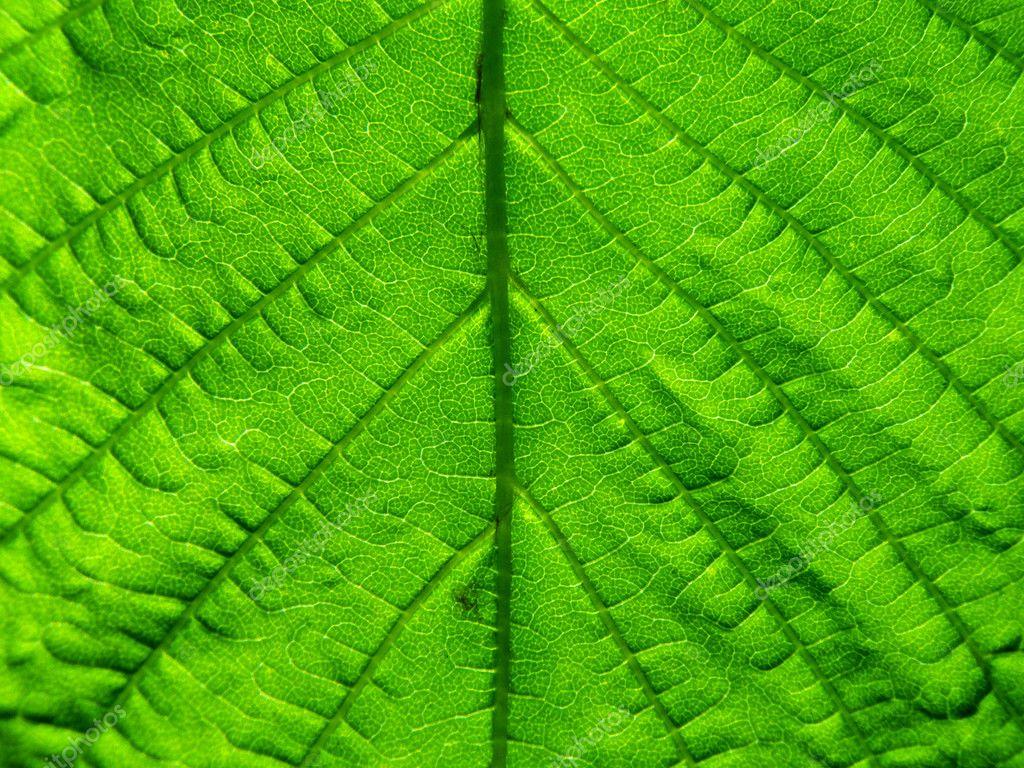 Deep green leaf