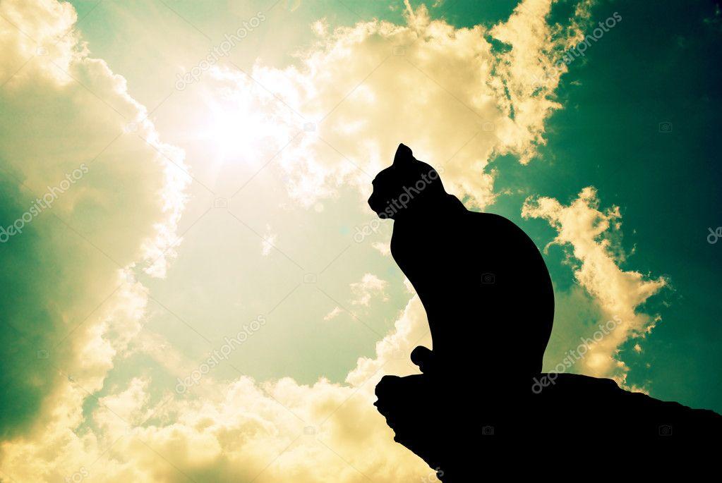 Cat and deep sky