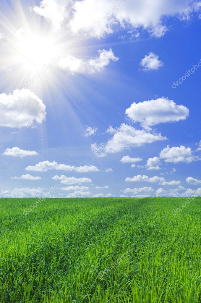 Фотообои Field of grass and blue sky