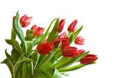 Kytice tulipány