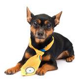 elszigetelt portréja kutya divat