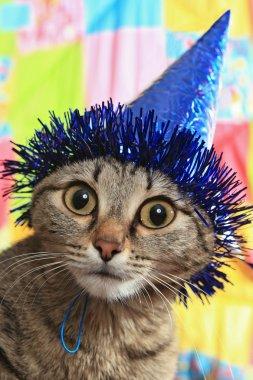 Thoughtful cat in a celebratory cap