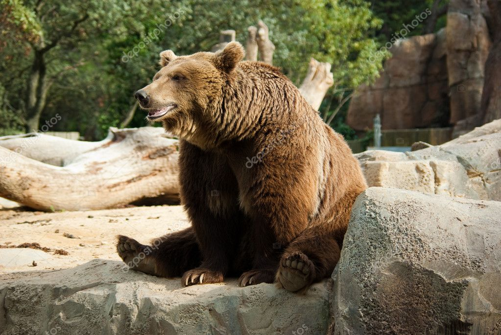 Download - Funny brown bear — Stock Image #1131543