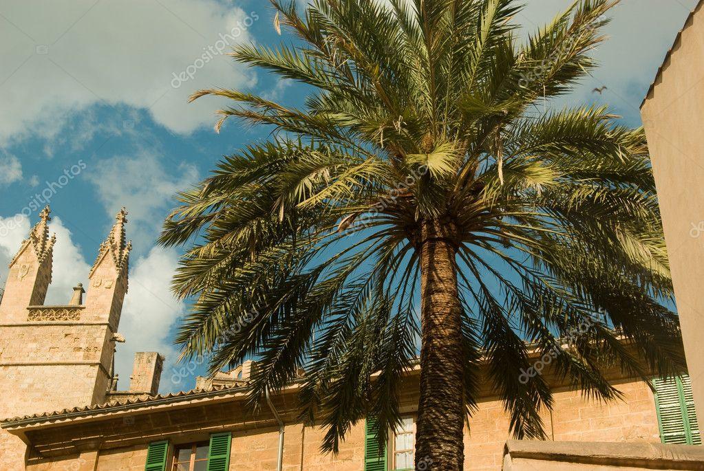 Χρονολόγηση στην έρημο Palm