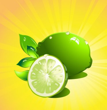 Lime citrus fruit. Vector