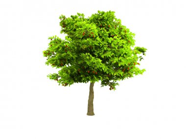 Lone green tree isolated on white