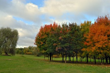 Autumn tree in park
