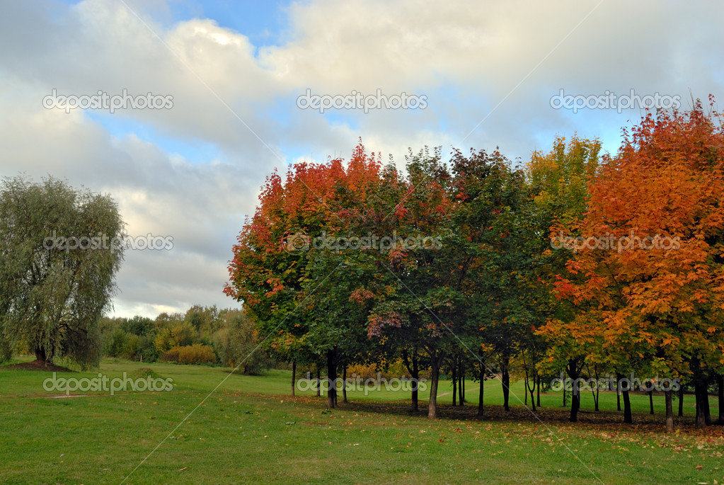 Autumn tree in park