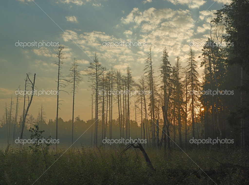 Фотообои Fog in the forest at morning