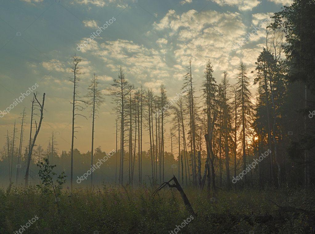 Фотообои Туман в лесу утром