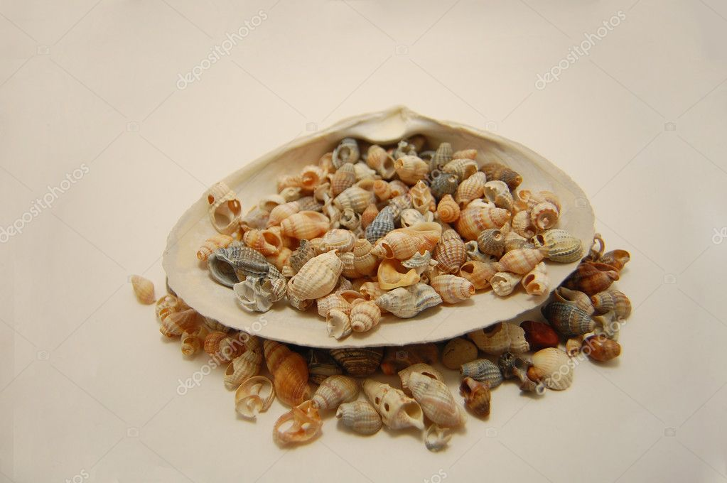One large and a lot of small shells