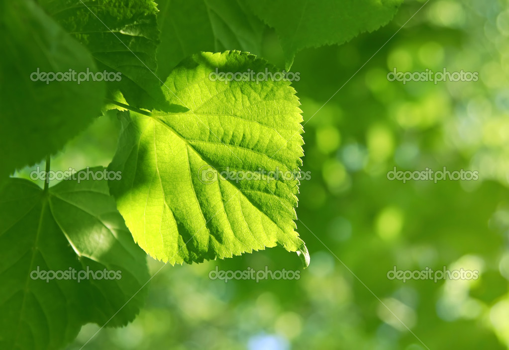 Close-up of green leaf glowing in sunlig