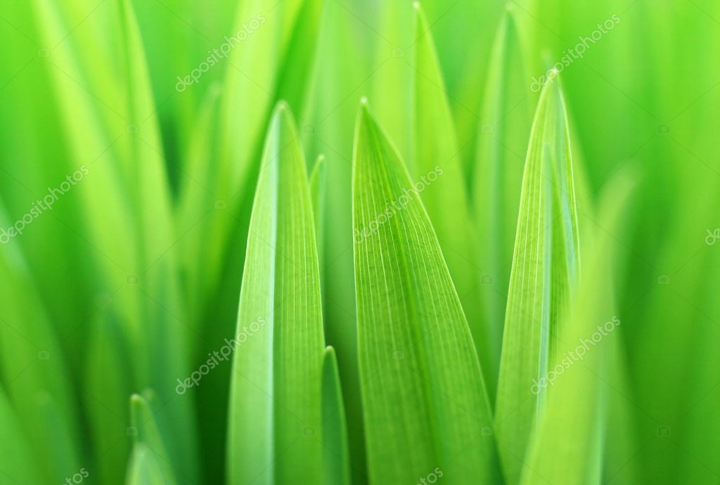 Close up of the green grass